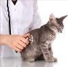 Ветеринарные клиники в Золотухино
